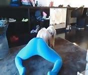 Montre ce que ces pantalons yoga font